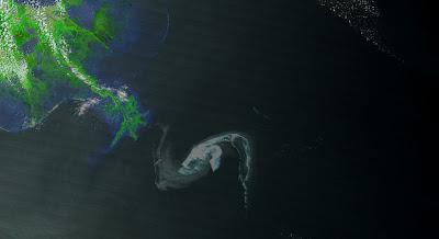 Read more about the article Aktuelles Satellitenbild von MODIS zeigt die Ölpest vor New Orleans