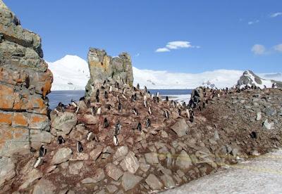 Read more about the article Google Streetview am Südpol – Entdecken Sie die Pinguine