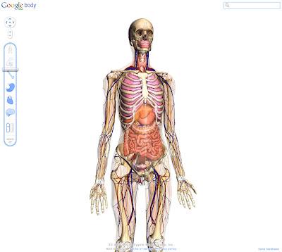 Read more about the article Google Body zeigt den menschlichen Körper bis ins Detail